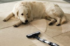 """Z cyklu: """"SZYBKIE RADY DLA OGŁADY – pupile w domu, a czyszczenie dywanów."""""""
