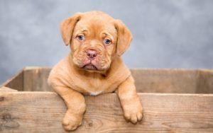 Czyszczenie dywanów – psie i kocie odchody.
